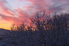 Manhã do inverno, alvorecer Fotos de Stock Royalty Free