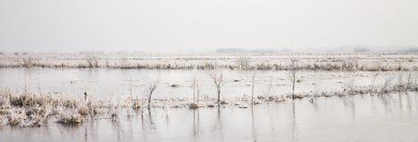 Manhã do inverno em Teufelsmoor perto de Brema Alemanha Fotos de Stock