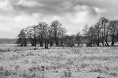 Manhã do inverno em Teufelsmoor perto de Brema Alemanha Foto de Stock