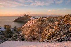 Manhã do inverno no zimbro do parque Fotografia de Stock Royalty Free