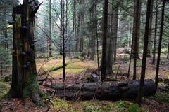manhã do outono na floresta imagem de stock royalty free