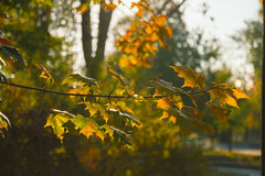 Manhã do outono no parque Imagem de Stock