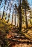 Manhã do outono nos cumes Fotos de Stock Royalty Free