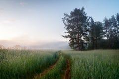 Manhã do panorama da paisagem com campo da névoa fotos de stock
