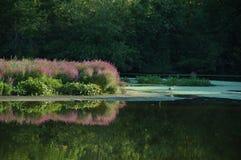 Manhã do rio de Blackstone Imagens de Stock Royalty Free