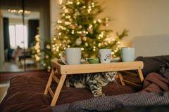 Manhã do ` s do ano novo com a família Fotografia de Stock Royalty Free