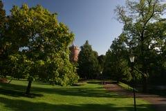 Manhã do verão no parque Fotos de Stock Royalty Free