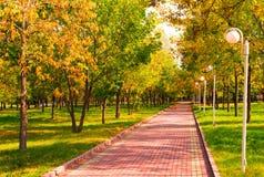 Manhã dourada em um parque Imagens de Stock Royalty Free