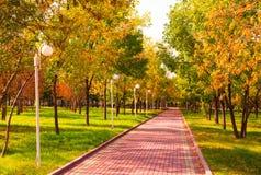 Manhã dourada em um parque Fotografia de Stock Royalty Free