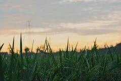 manhã em campos do arroz Fotografia de Stock Royalty Free