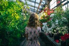 Manhã em um jardim bonito Fotos de Stock Royalty Free