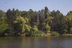 Manhã em um lago Foto de Stock Royalty Free