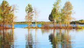 Manhã em um lago Fotografia de Stock