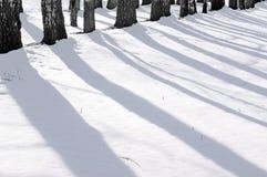 Manhã em uma madeira do inverno. Fotos de Stock Royalty Free