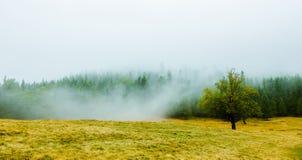 Manhã enevoada cênico na paisagem das montanhas Fotos de Stock Royalty Free