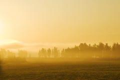 Manhã amarela enevoada Fotografia de Stock Royalty Free