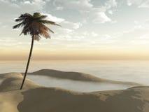 Manhã enevoada da única palmeira Fotografia de Stock Royalty Free