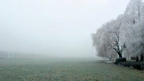 Manhã enevoada do inverno Imagem de Stock
