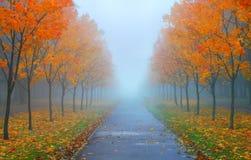 Manhã enevoada do outono fotos de stock royalty free
