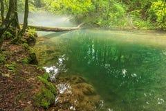Manhã enevoada e rio enevoado no parque nacional de Beusnita, Romênia Imagem de Stock