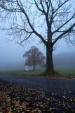 Manhã enevoada em montanhas de Jizera Fotos de Stock Royalty Free