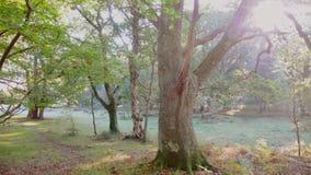 Manhã enevoada na floresta nova imagens de stock