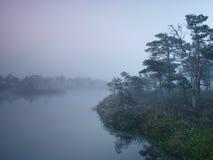 Manhã enevoada no pântano Fotos de Stock