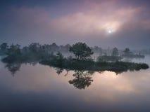 Manhã enevoada no pântano Imagens de Stock Royalty Free