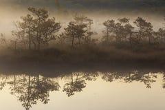 Manhã enevoada no pântano fotografia de stock
