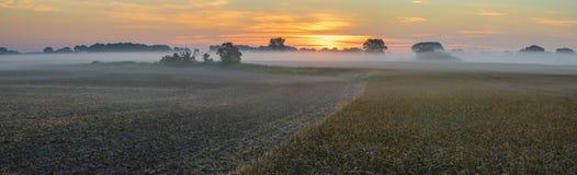 manhã enevoada sobre o campo do trigo maduro Fim do verão nos campos em Alemanha na manhã foto de stock