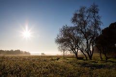 Manhã ensolarada bonita sobre o campo no inverno com o poço de água sob a árvore sem folhas imagens de stock