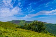 Manhã ensolarada do verão no cume de Borzhava nos Carpathians Imagens de Stock Royalty Free