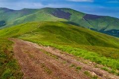 Manhã ensolarada do verão no cume de Borzhava nos Carpathians Imagem de Stock