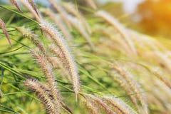 Manhã fresca da grama Imagens de Stock