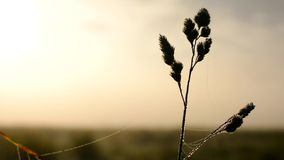 Manhã fria, névoa, vento e nascer do sol do outono filme