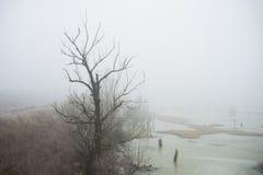 Manhã fria no pântano Fotografia de Stock