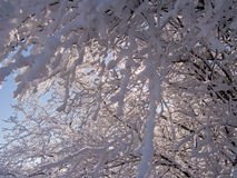 Manhã do inverno. Fotografia de Stock Royalty Free