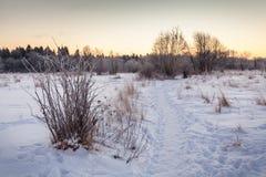 Manhã gelado. Imagem de Stock Royalty Free