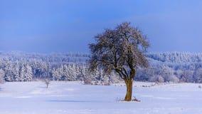Manhã gelado do inverno Fotografia de Stock Royalty Free
