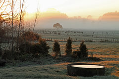 Manhã gelado na exploração agrícola Imagem de Stock Royalty Free