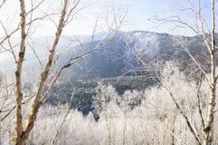 Manhã gelado na floresta Fotos de Stock