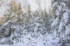 Manhã gelado na floresta Imagens de Stock