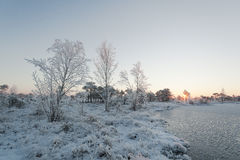 Manhã gelado na paisagem da floresta com as plantas, as árvores e água congeladas Fotografia de Stock Royalty Free
