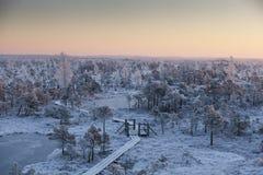 Manhã gelado na paisagem da floresta com as plantas, as árvores e água congeladas Fotos de Stock