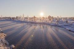 Manhã gelado na paisagem da floresta com as plantas, as árvores e água congeladas Fotos de Stock Royalty Free
