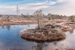 Manhã gelado no pântano aumentado Ajardine com as plantas congeladas e o parque nacional de Kemeri da hoar-geada em Letónia Foto de Stock Royalty Free