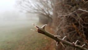 Manhã gelado no parque Fotos de Stock Royalty Free