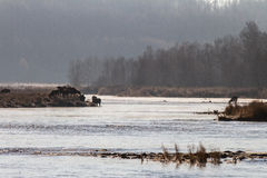 Manhã livre de gelo do rio Imagens de Stock