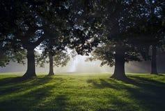 Manhã Misty Sun Rays através dos carvalhos Fotos de Stock Royalty Free