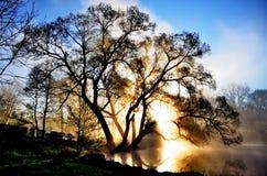 Manhã, névoa e sol 2 fotografia de stock